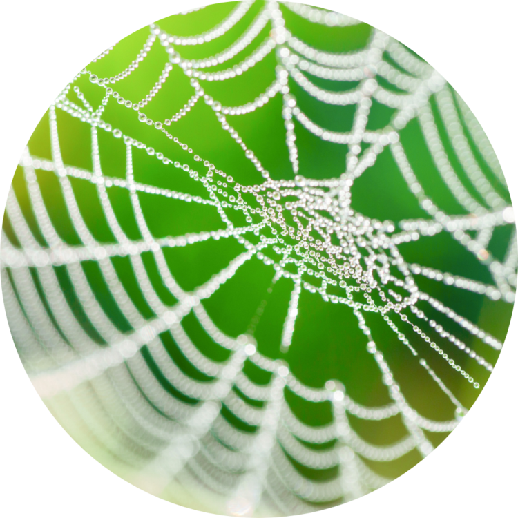 Spinnennetz, Netzwerk, Kontakte, Partner, Natur, spider, network, contacts, nature